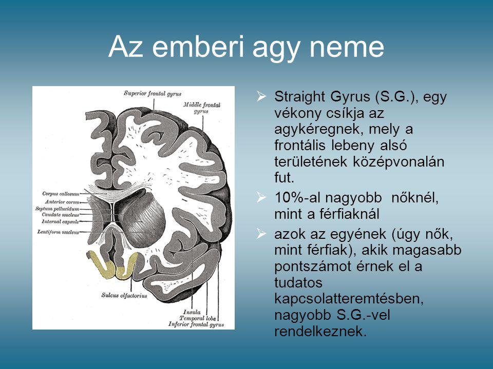 Az emberi agy neme  Straight Gyrus (S.G.), egy vékony csíkja az agykéregnek, mely a frontális lebeny alsó területének középvonalán fut.  10%-al nagy