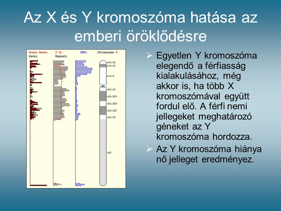 Az X és Y kromoszóma hatása az emberi öröklődésre  Egyetlen Y kromoszóma elegendő a férfiasság kialakulásához, még akkor is, ha több X kromoszómával