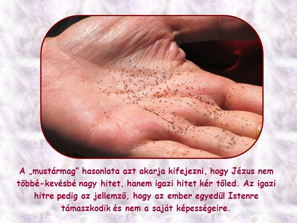 Jézus minden csodát, amelyet közvetlenül, vagy az övéi által tett, mindig Isten országáért, az evangéliumért, vagy az emberek üdvösségéért tette.