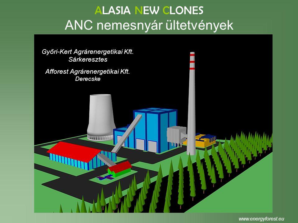 ALASIA NEW CLONES ANC nemesnyár ültetvények www.energyforest.eu Győri-Kert Agrárenergetikai Kft. Sárkeresztes Afforest Agrárenergetikai Kft. Derecske