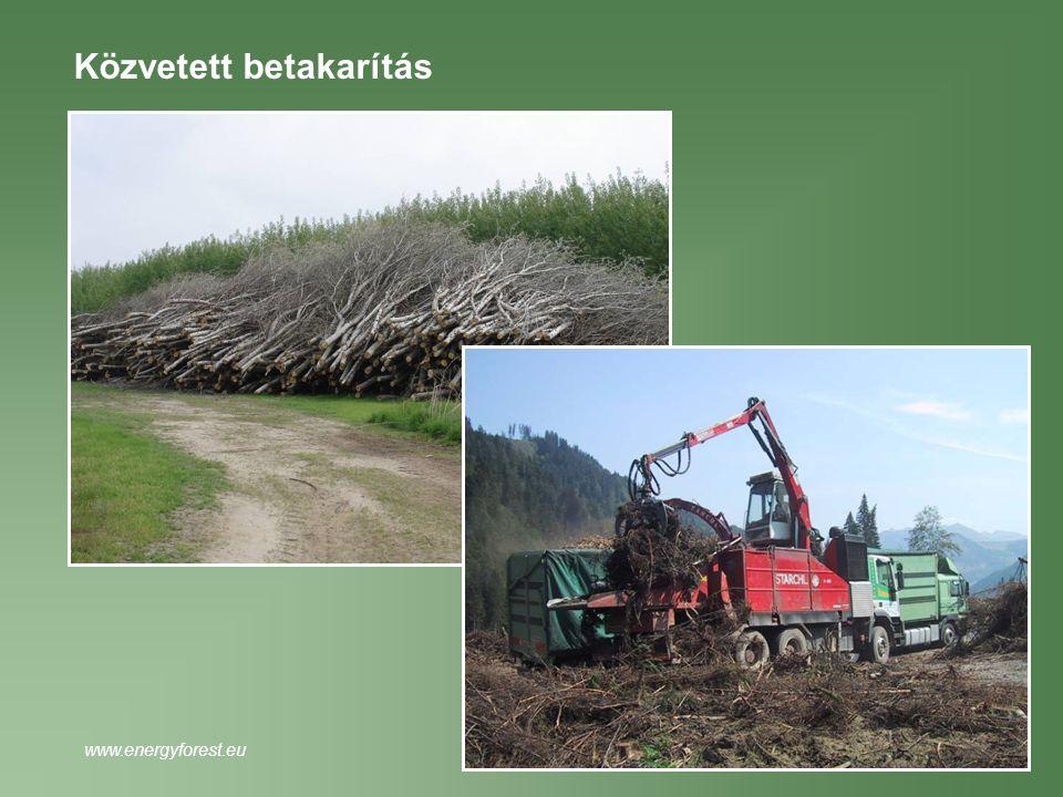 Közvetett betakarítás www.energyforest.eu
