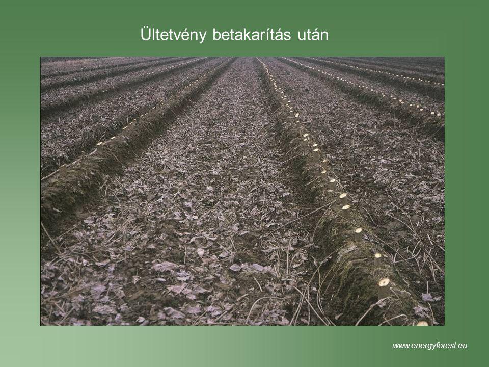 Ültetvény betakarítás után www.energyforest.eu