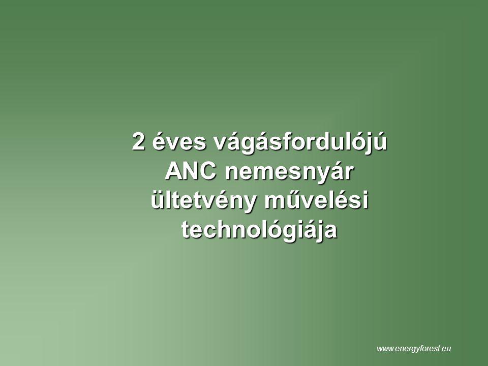 2 éves vágásfordulójú ANC nemesnyár ültetvény művelési technológiája www.energyforest.eu