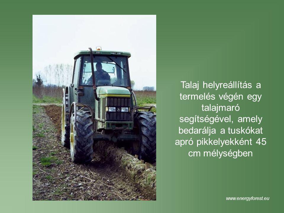 Talaj helyreállítás a termelés végén egy talajmaró segítségével, amely bedarálja a tuskókat apró pikkelyekként 45 cm mélységben www.energyforest.eu