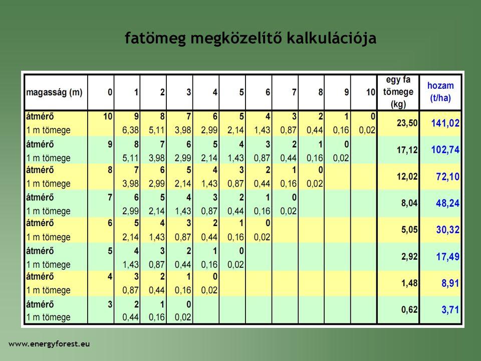 fatömeg megközelítő kalkulációja www.energyforest.eu