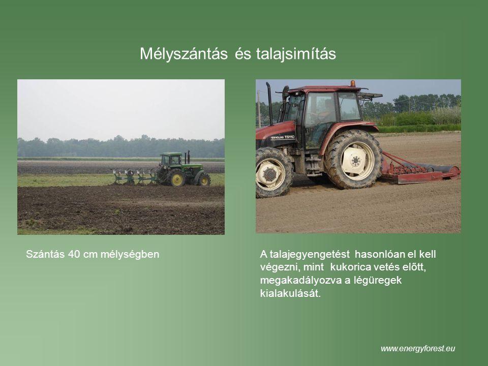 Mélyszántás és talajsimítás Szántás 40 cm mélységbenA talajegyengetést hasonlóan el kell végezni, mint kukorica vetés előtt, megakadályozva a légürege
