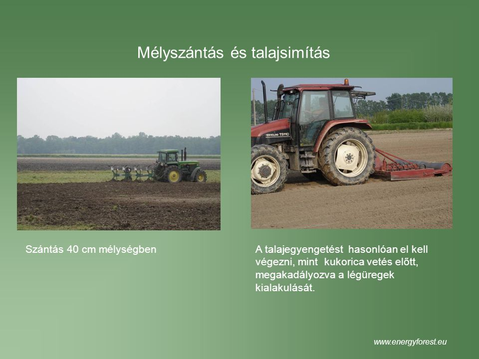Ültetési hálózat Sirio – AF2 Monviso 60 cm 50 cm 300 cm www.energyforest.eu