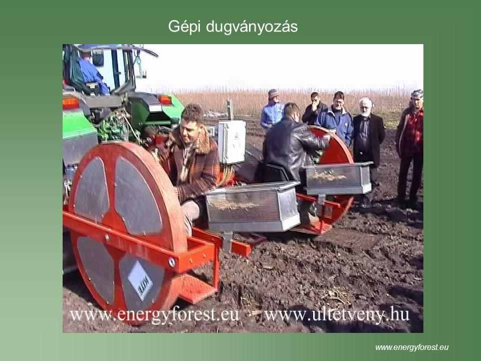 Beszállítás, fogadás www.energyforest.eu