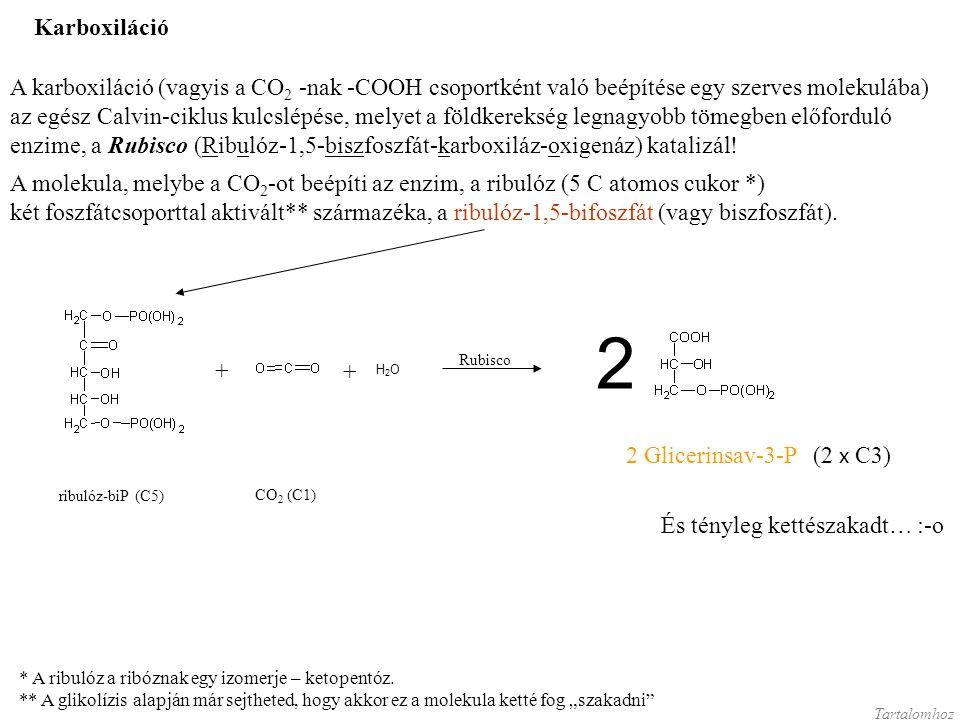 Karboxiláció A karboxiláció (vagyis a CO 2 -nak -COOH csoportként való beépítése egy szerves molekulába) az egész Calvin-ciklus kulcslépése, melyet a