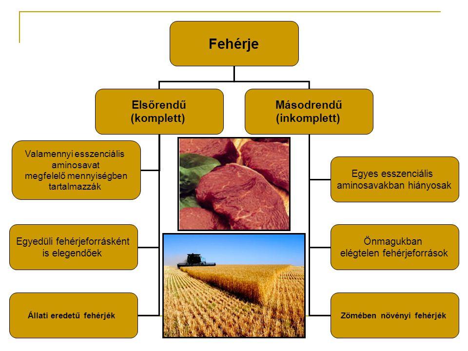 Fehérje Elsőrendű (komplett) Másodrendű (inkomplett) Valamennyi esszenciális aminosavat megfelelő mennyiségben tartalmazzák Egyedüli fehérjeforrásként is elegendőek Állati eredetű fehérjék Egyes esszenciális aminosavakban hiányosak Önmagukban elégtelen fehérjeforrások Zömében növényi fehérjék