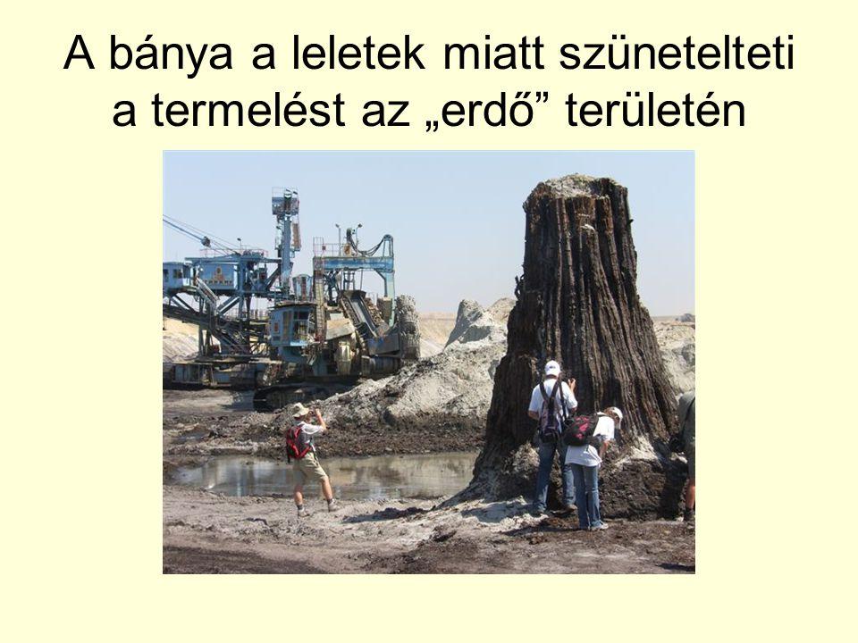 """A bánya a leletek miatt szünetelteti a termelést az """"erdő"""" területén"""