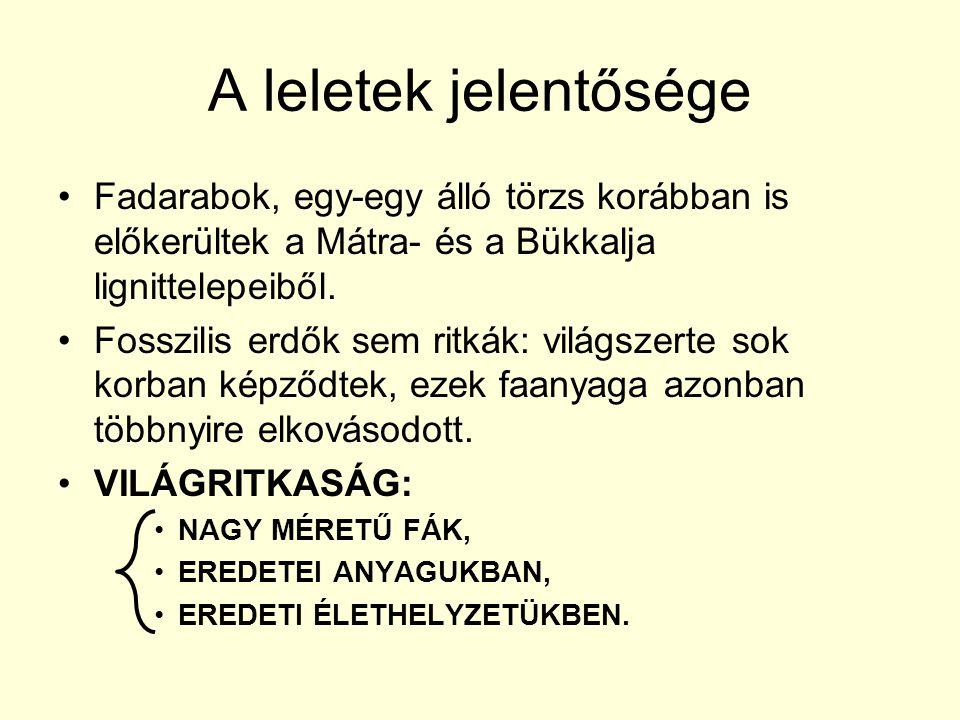 A leletek jelentősége •Fadarabok, egy-egy álló törzs korábban is előkerültek a Mátra- és a Bükkalja lignittelepeiből. •Fosszilis erdők sem ritkák: vil