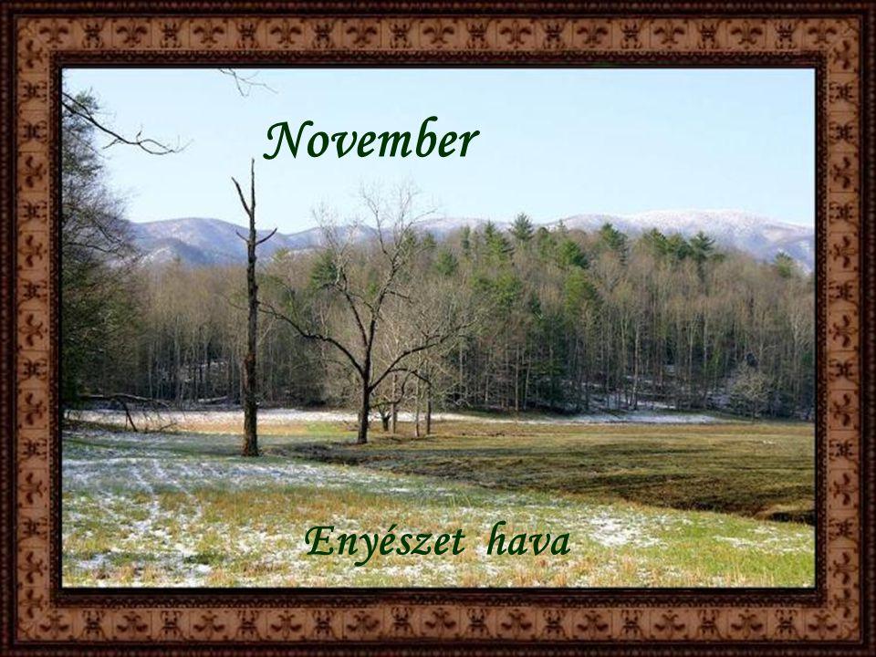 Október Magvető hava