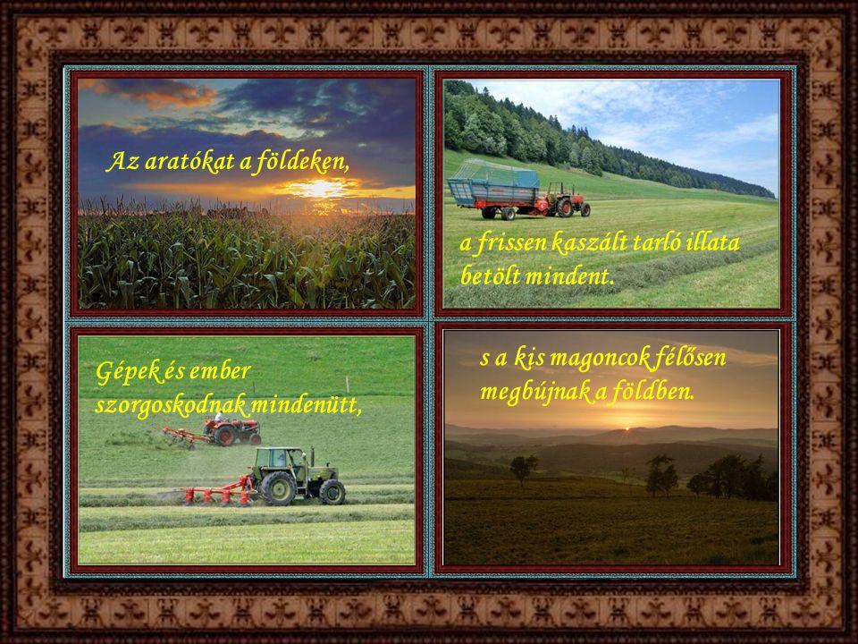 Az aratókat a földeken, a frissen kaszált tarló illata betölt mindent.