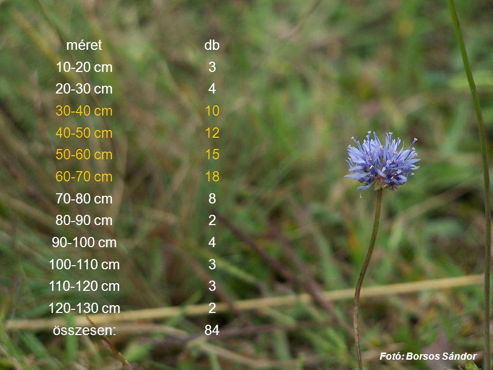 méretdb 10-20 cm3 20-30 cm4 30-40 cm10 40-50 cm12 50-60 cm15 60-70 cm18 70-80 cm8 80-90 cm2 90-100 cm4 100-110 cm3 110-120 cm3 120-130 cm2 összesen:84