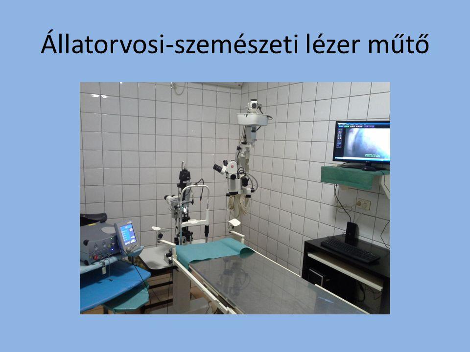 Állatorvosi-szemészeti lézer műtő