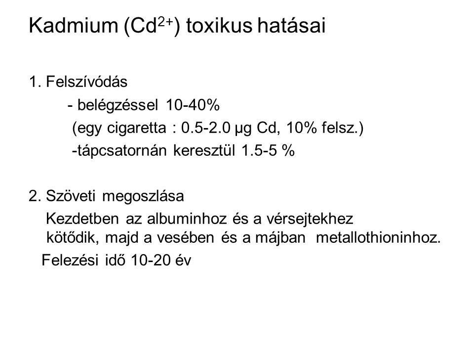 Kadmium (Cd 2+ ) toxikus hatásai 1. Felszívódás - belégzéssel 10-40% (egy cigaretta : 0.5-2.0 µg Cd, 10% felsz.) -tápcsatornán keresztül 1.5-5 % 2. Sz
