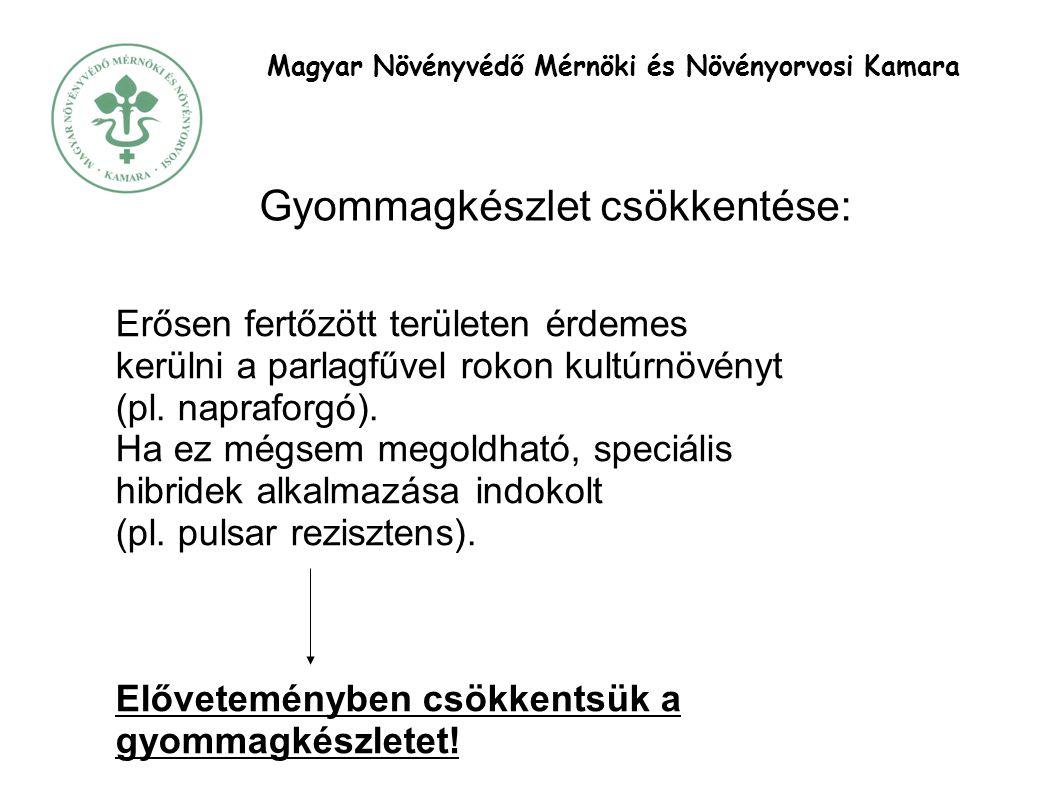 Magyar Növényvédő Mérnöki és Növényorvosi Kamara Gyommagkészlet csökkentése: Erősen fertőzött területen érdemes kerülni a parlagfűvel rokon kultúrnövényt (pl.