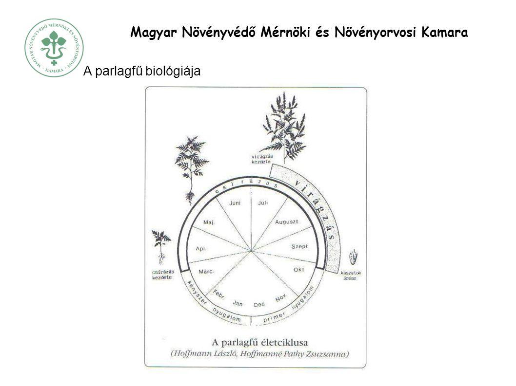 Magyar Növényvédő Mérnöki és Növényorvosi Kamara A parlagfű biológiája