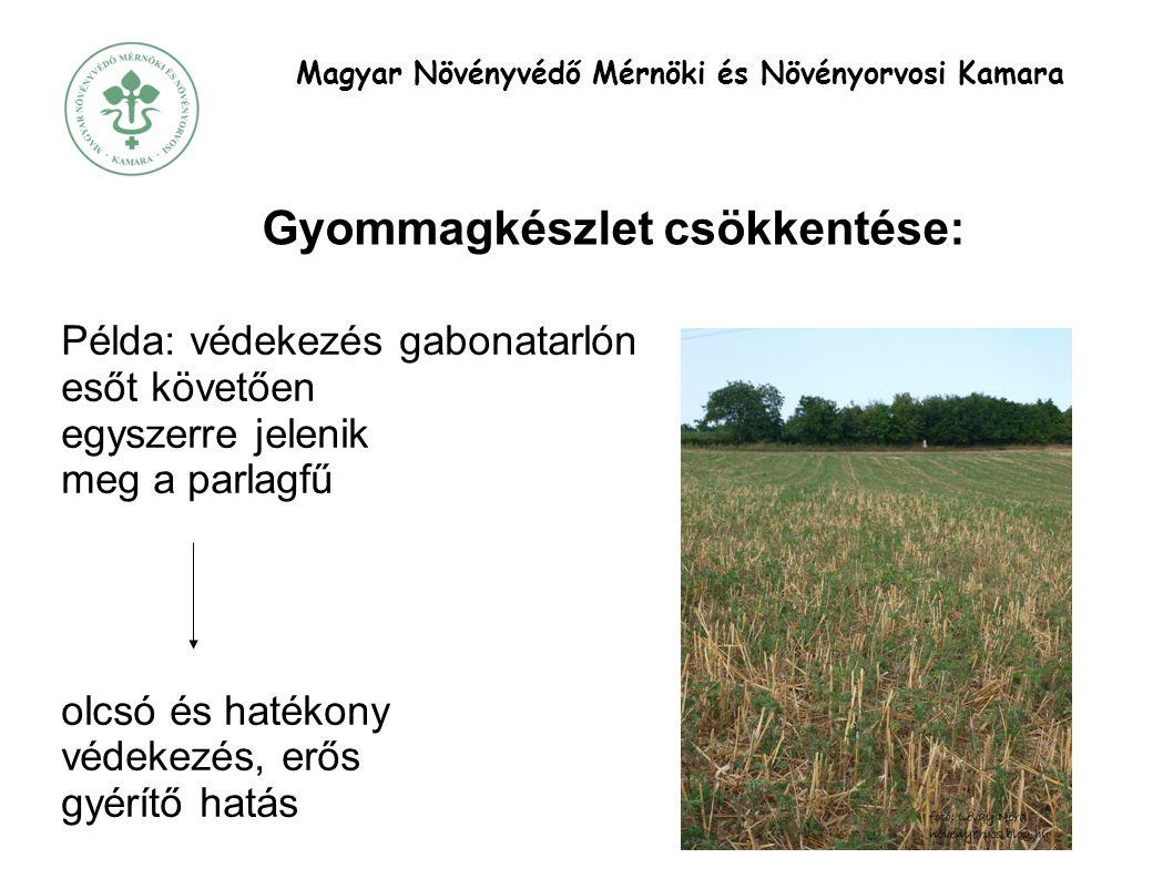 Magyar Növényvédő Mérnöki és Növényorvosi Kamara Gyommagkészlet csökkentése: Példa: védekezés gabonatarlón esőt követően egyszerre jelenik meg a parlagfű olcsó és hatékony védekezés, erős gyérítő hatás