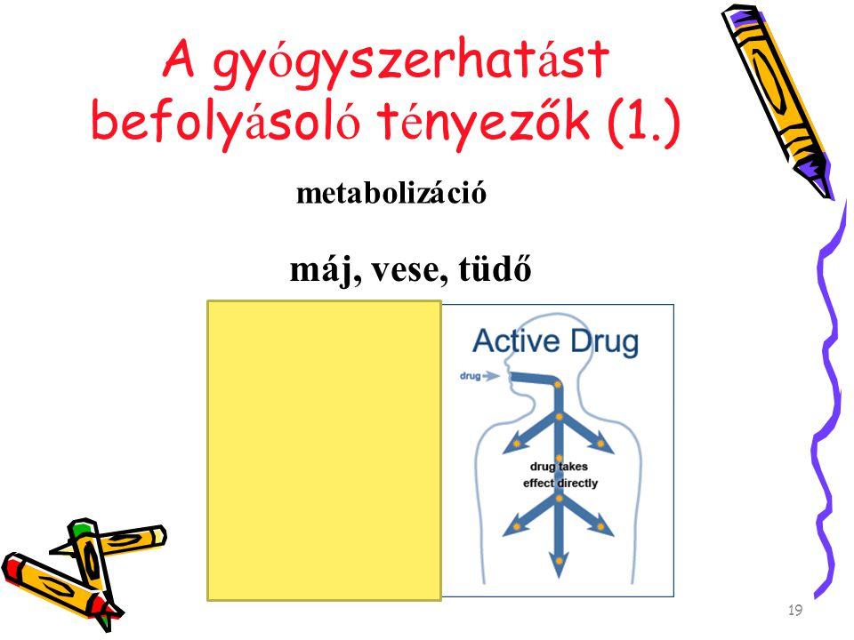 A gy ó gyszerhat á st befoly á sol ó t é nyezők (1.) átalakulás metabolizáció máj, vese, tüdő 19