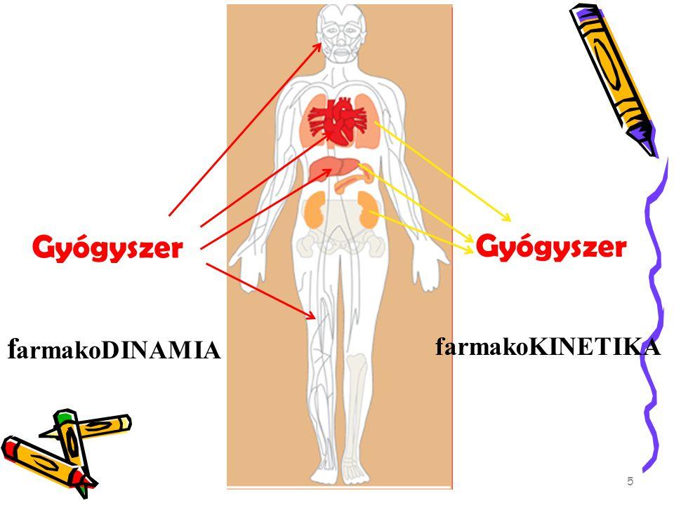Gyógyszer f armakoDINAMIA farmakoKINETIKA 5
