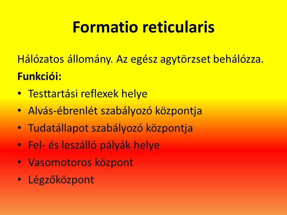 Formatio reticularis Hálózatos állomány. Az egész agytörzset behálózza. Funkciói: • Testtartási reflexek helye • Alvás-ébrenlét szabályozó központja •