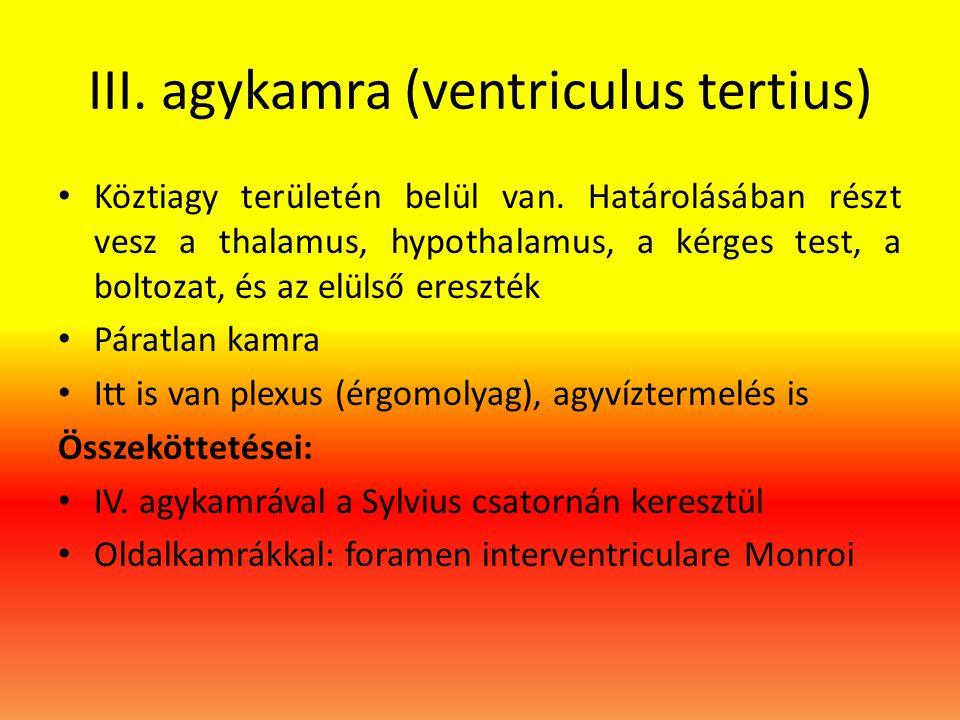 III. agykamra (ventriculus tertius) • Köztiagy területén belül van. Határolásában részt vesz a thalamus, hypothalamus, a kérges test, a boltozat, és a