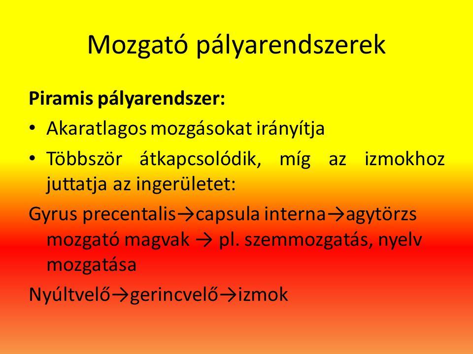 Mozgató pályarendszerek Piramis pályarendszer: • Akaratlagos mozgásokat irányítja • Többször átkapcsolódik, míg az izmokhoz juttatja az ingerületet: G