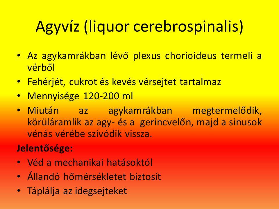 Agyvíz (liquor cerebrospinalis) • Az agykamrákban lévő plexus chorioideus termeli a vérből • Fehérjét, cukrot és kevés vérsejtet tartalmaz • Mennyisége 120-200 ml • Miután az agykamrákban megtermelődik, körüláramlik az agy- és a gerincvelőn, majd a sinusok vénás vérébe szívódik vissza.