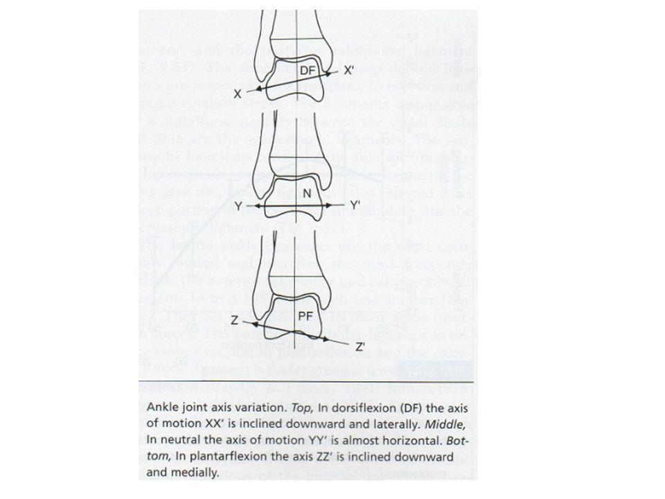 Rotáció a transzverzális és a frontális síkban transverzális Medial: 7°Lateral: 10° frontális Dorsal flexionPlantar flexion Inclination of the ankle j