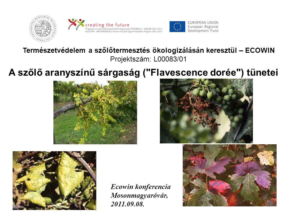 Természetvédelem a szőlőtermesztés ökologizálásán keresztül – ECOWIN Projektszám: L00083/01 A szőlő aranyszínű sárgaság (