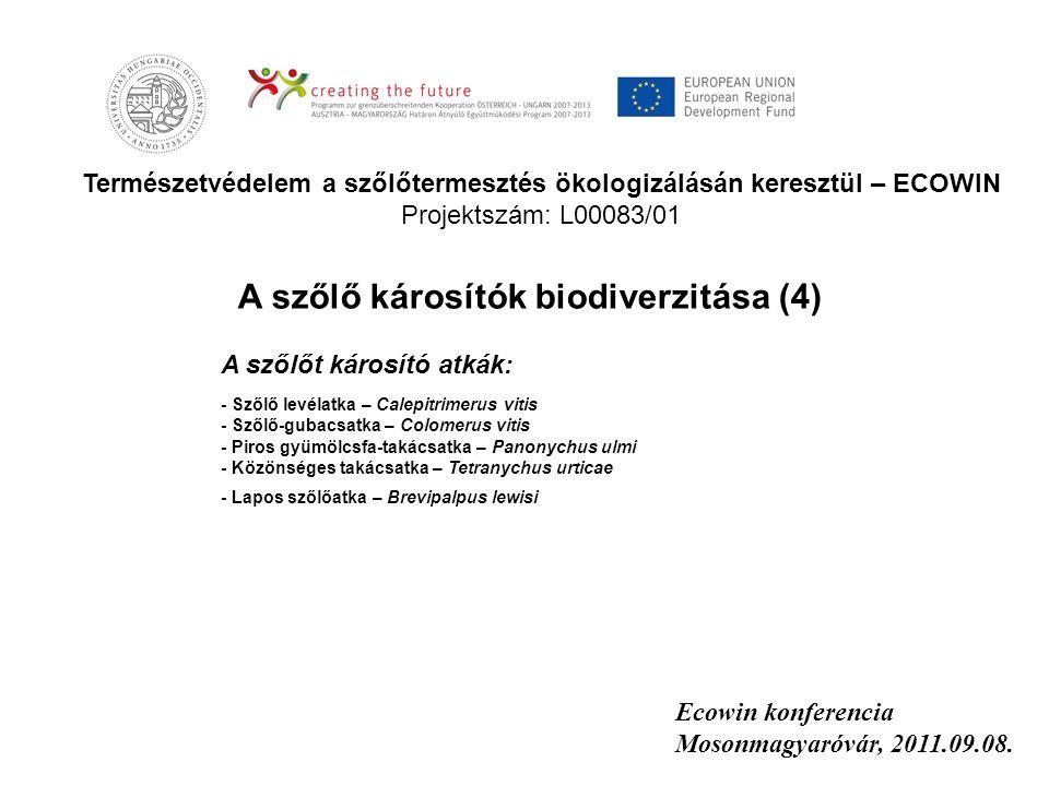 Természetvédelem a szőlőtermesztés ökologizálásán keresztül – ECOWIN Projektszám: L00083/01 Ecowin konferencia Mosonmagyaróvár, 2011.09.08. A szőlőt k