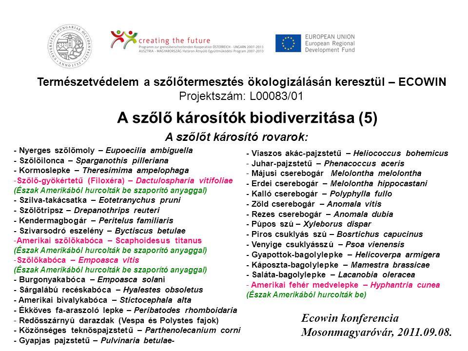 Természetvédelem a szőlőtermesztés ökologizálásán keresztül – ECOWIN Projektszám: L00083/01 Ecowin konferencia Mosonmagyaróvár, 2011.09.08. A szőlő ká