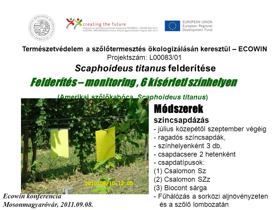 Természetvédelem a szőlőtermesztés ökologizálásán keresztül – ECOWIN Projektszám: L00083/01 Felderítés – monitoring, 6 kísérleti színhelyen (Amerikai