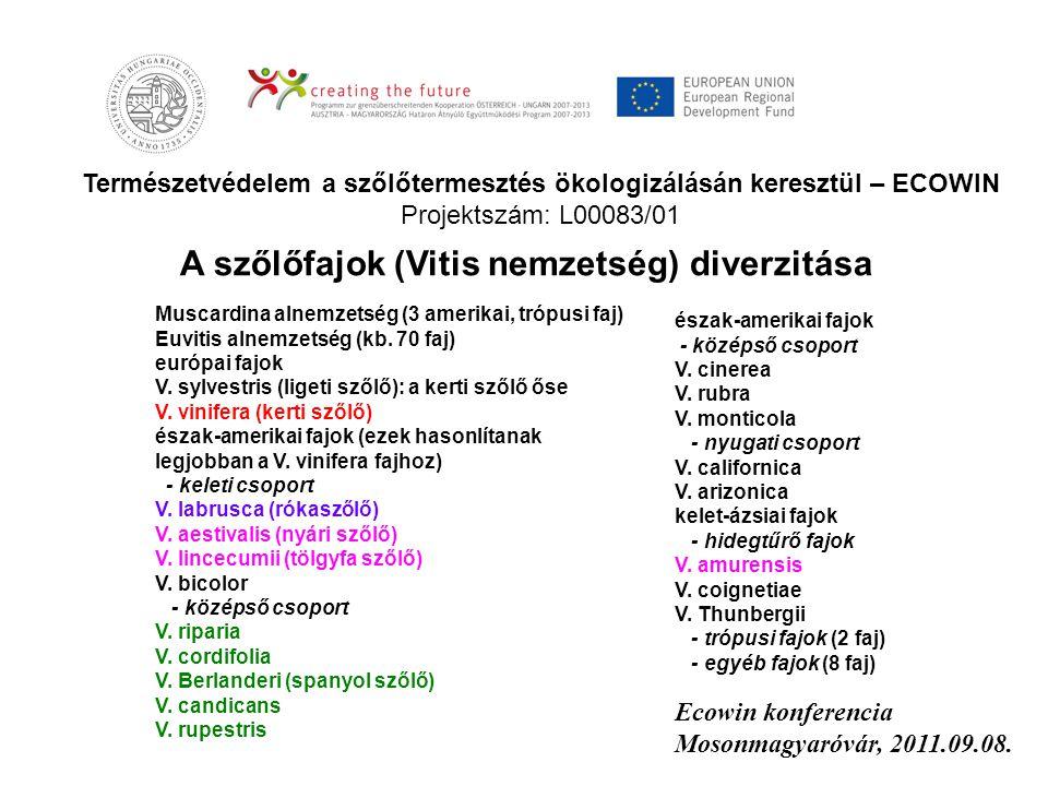 Természetvédelem a szőlőtermesztés ökologizálásán keresztül – ECOWIN Projektszám: L00083/01 Ecowin konferencia Mosonmagyaróvár, 2011.09.08. A szőlőfaj