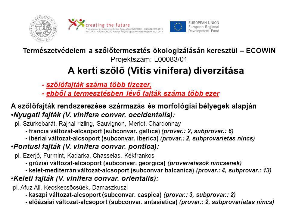 Természetvédelem a szőlőtermesztés ökologizálásán keresztül – ECOWIN Projektszám: L00083/01 - szőlőfajták száma több tízezer, - ebből a termesztésben