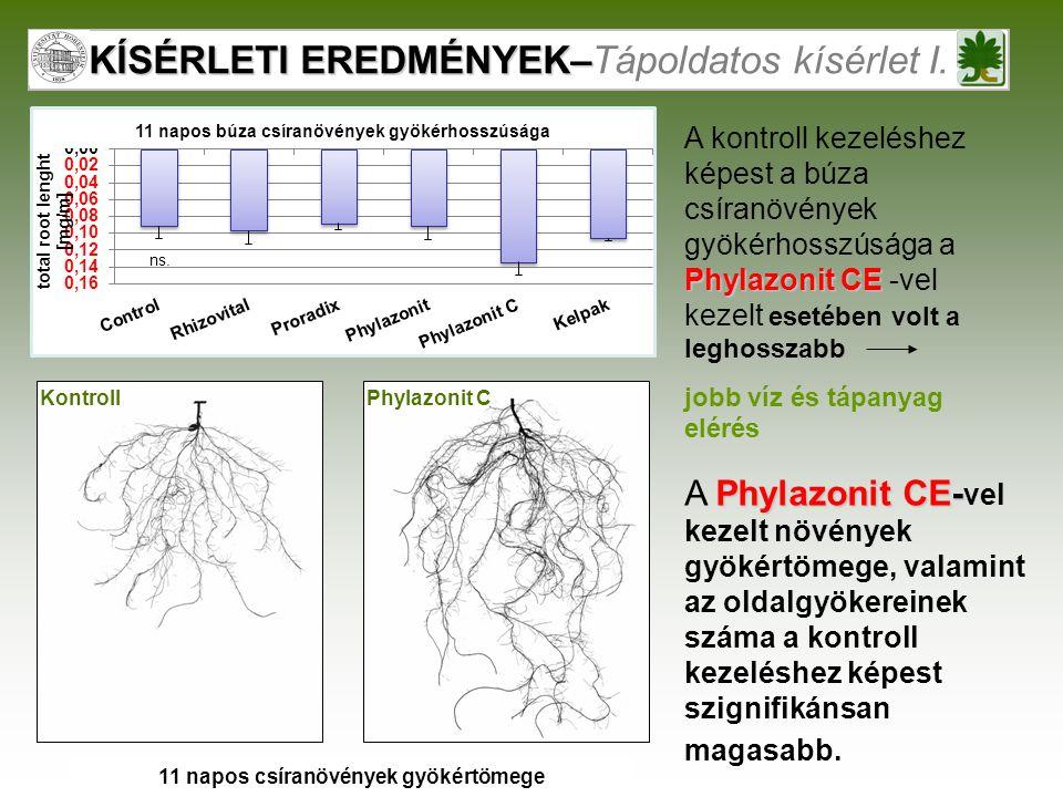 KÍSÉRLETI EREDMÉNYEK– KÍSÉRLETI EREDMÉNYEK–Tápoldatos kísérlet I. Phylazonit CKontroll 11 napos búza csíranövények gyökérhosszúsága Phylazonit CE A ko