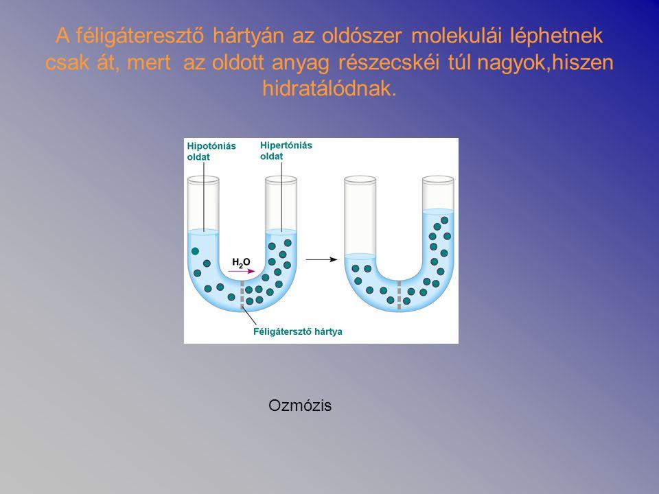 A féligáteresztő hártyán az oldószer molekulái léphetnek csak át, mert az oldott anyag részecskéi túl nagyok,hiszen hidratálódnak. Ozmózis