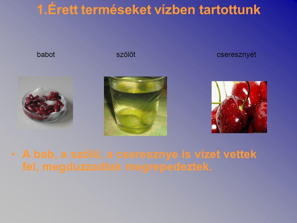 1.Érett terméseket vízben tartottunk •A bab, a szőlő, a cseresznye is vizet vettek fel, megduzzadtak megrepedeztek. babotszőlőtcseresznyét