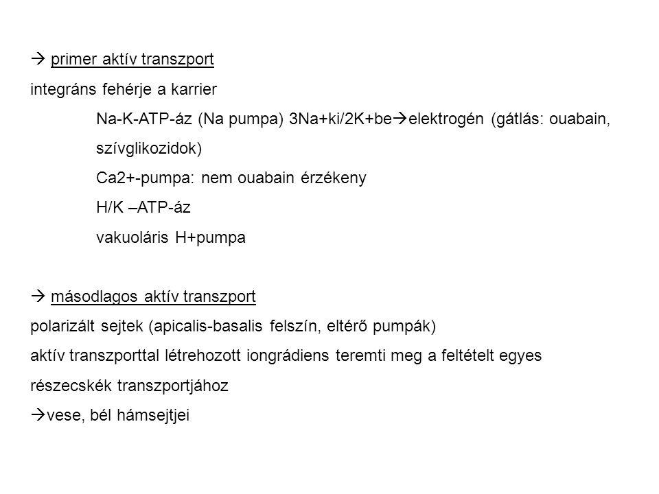  primer aktív transzport integráns fehérje a karrier Na-K-ATP-áz (Na pumpa) 3Na+ki/2K+be  elektrogén (gátlás: ouabain, szívglikozidok) Ca2+-pumpa: n