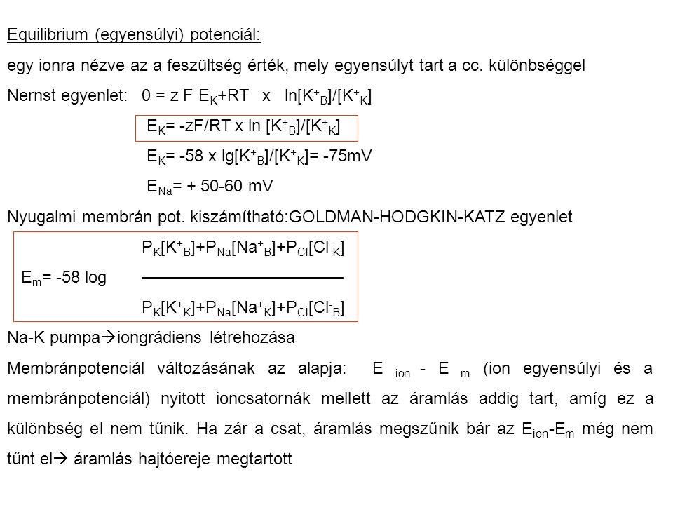 Equilibrium (egyensúlyi) potenciál: egy ionra nézve az a feszültség érték, mely egyensúlyt tart a cc. különbséggel Nernst egyenlet: 0 = z F E K +RT x