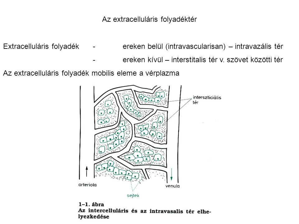 Az extracelluláris folyadéktér Extracelluláris folyadék-ereken belül (intravascularisan) – intravazális tér -ereken kívül – interstitalis tér v. szöve