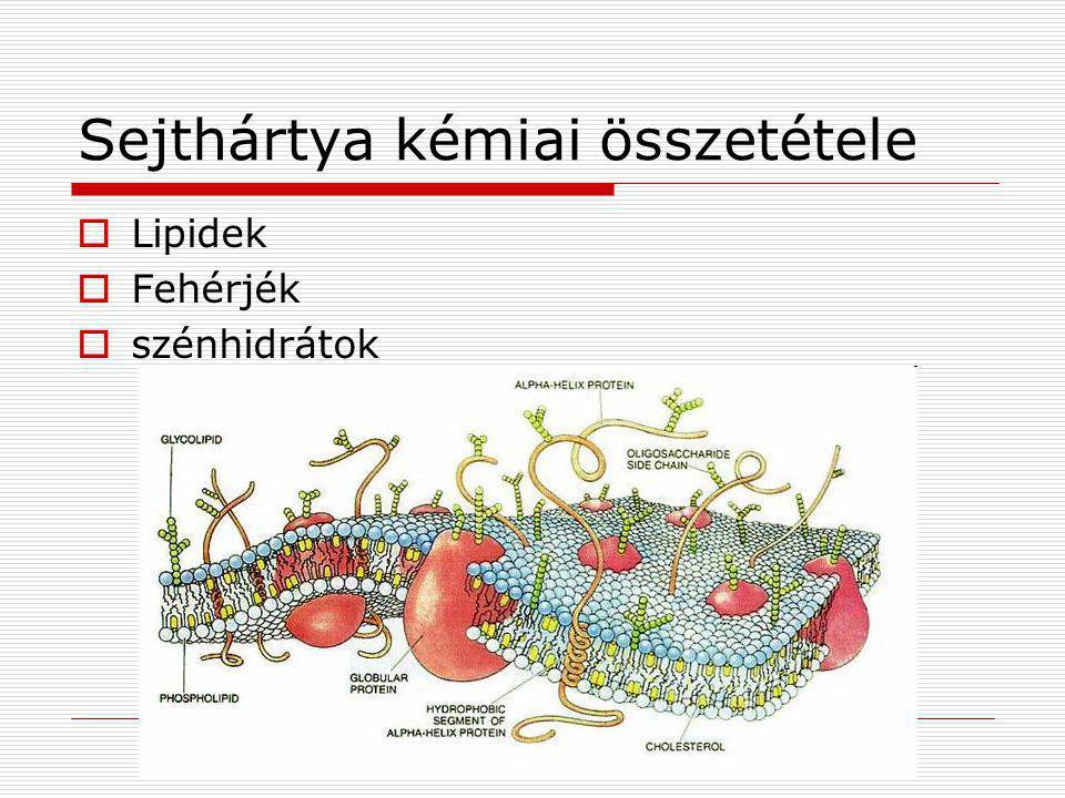 Sejthártya kémiai összetétele  Lipidek  Fehérjék  szénhidrátok