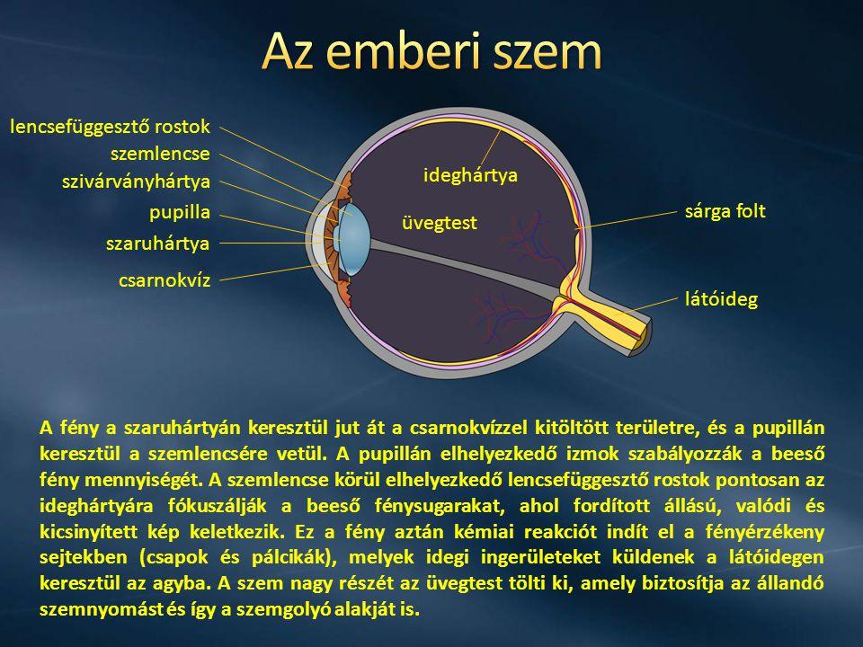 üvegtest szaruhártya csarnokvíz szivárványhártya pupilla lencsefüggesztő rostok szemlencse ideghártya sárga folt látóideg A fény a szaruhártyán keresztül jut át a csarnokvízzel kitöltött területre, és a pupillán keresztül a szemlencsére vetül.