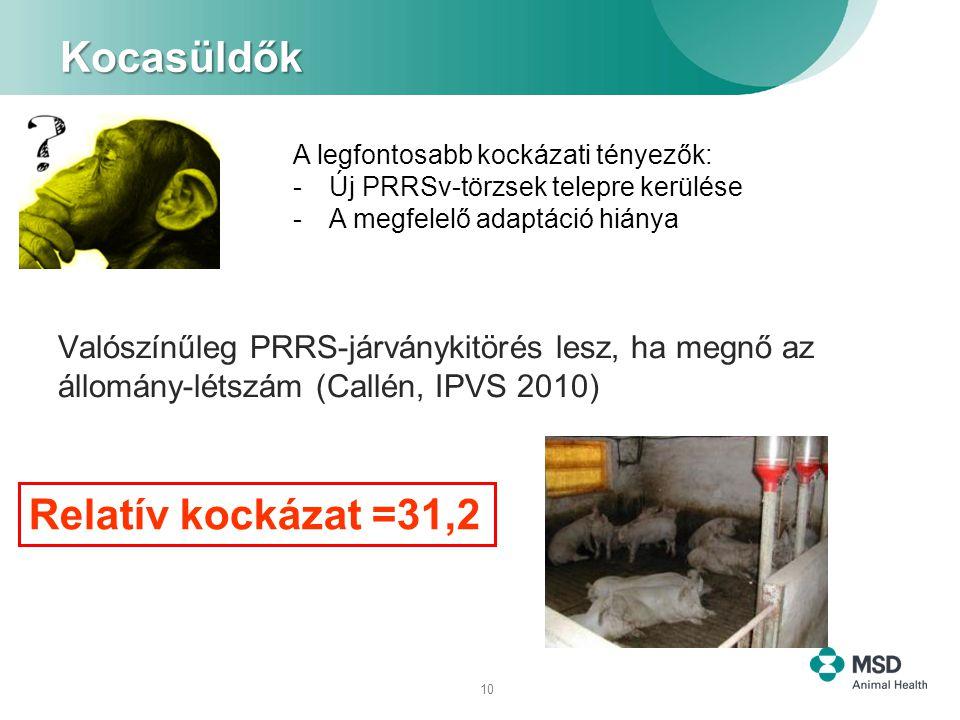 10 Kocasüldők Valószínűleg PRRS-járványkitörés lesz, ha megnő az állomány-létszám (Callén, IPVS 2010) Relatív kockázat =31,2 A legfontosabb kockázati tényezők: -Új PRRSv-törzsek telepre kerülése -A megfelelő adaptáció hiánya