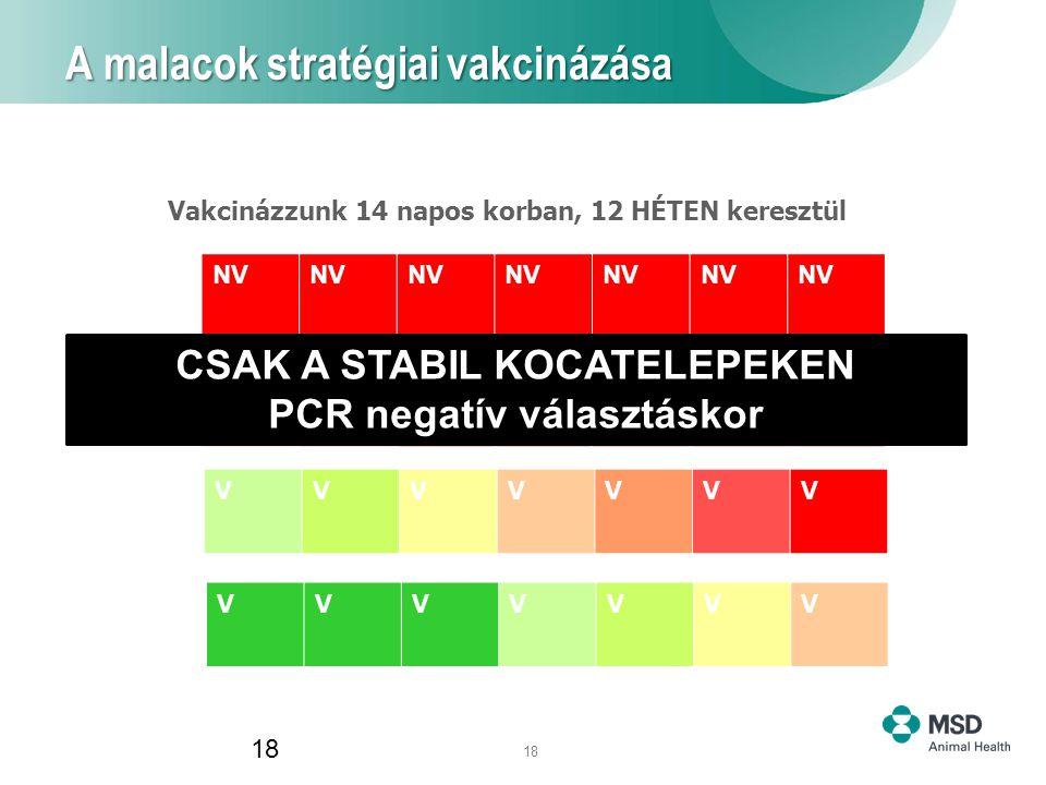 18 A malacok stratégiai vakcinázása 18 Vakcinázzunk 14 napos korban, 12 HÉTEN keresztül NV VVV VVVVVVV VVVVVVV CSAK A STABIL KOCATELEPEKEN PCR negatív választáskor