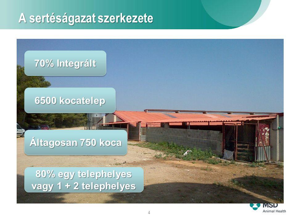 4 A sertéságazat szerkezete 70% Integrált 6500 kocatelep Áltagosan 750 koca 80% egy telephelyes vagy 1 + 2 telephelyes