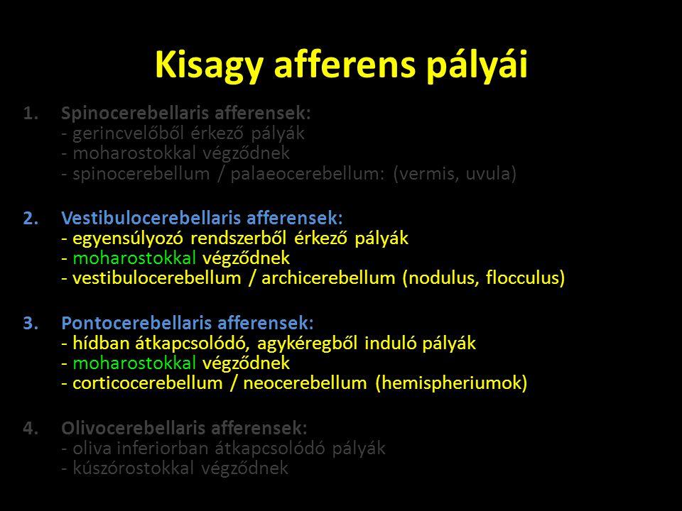 • Tractus vestibulocerebellaris: - az egyensúly érzékszervből és az agytörzsi vestibularis magvakból (nucleus vestibularis medialis et inferior) eredő pályák - keresztezetlen pályák - pedunculus cerebellaris inferioron lépnek be a kisagyba • Tractus pontocerebellaris: - a híd magjaiból (nuclei pontis) eredő pályák - keresztezett pályák -pedunculus cerebellaris mediuson lépnek be a kisagyba A hídmagvak az agykéregből eredő mozgató pályák kapcsolóállomásai: - tractus frontopontinus (Arnold) - tractus temporo-occipitopontinus (Türck)