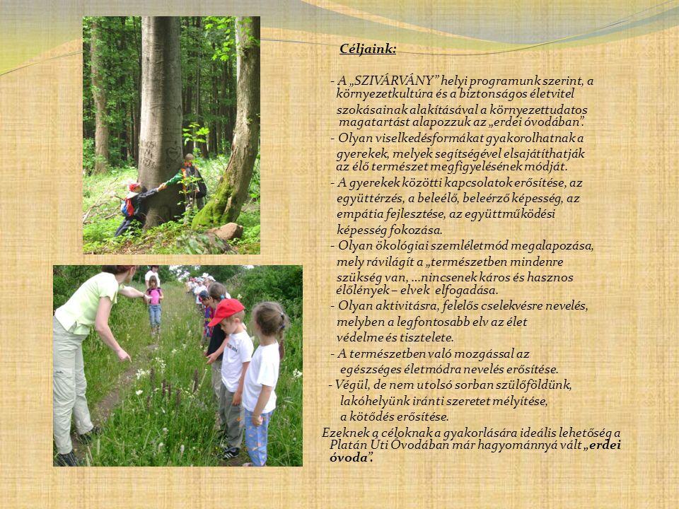 """ Feladatunk:  - A """"SZIVÁRVÁNY helyi programunk szerint, a környezetkultúra és a biztonságos életvitel  szokásainak alakításával a környezettudatos magatartás alapozása az """"erdei óvodában ."""